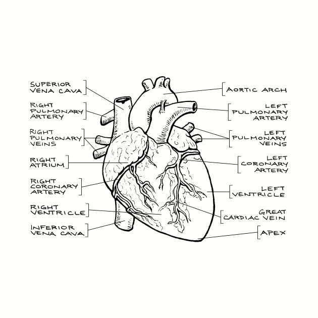 anatomical heart diagram 1999 saab 9 3 radio wiring black text t shirt
