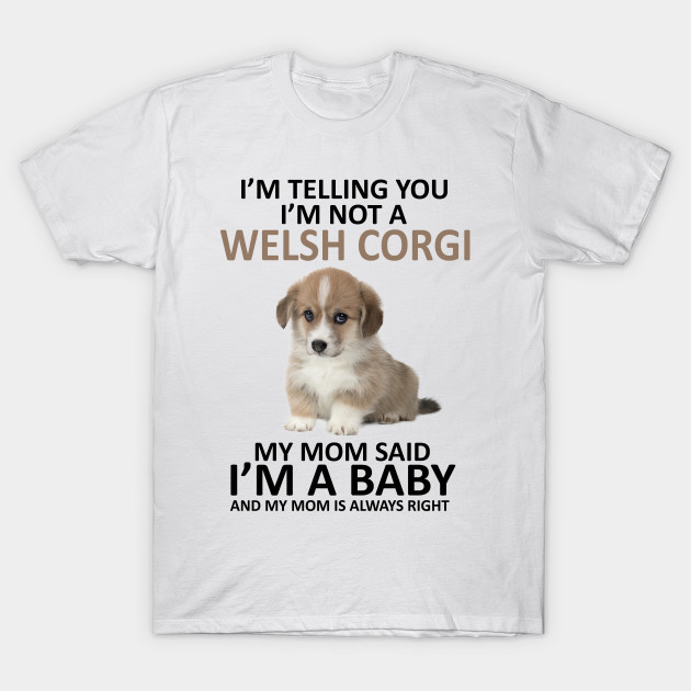 corgi baby