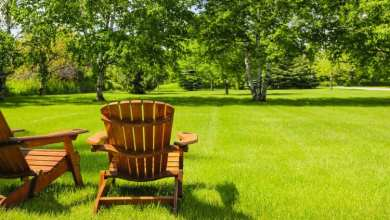 Photo of 4 Unique Affordable Landscape Design Ideas That Will Save You Some