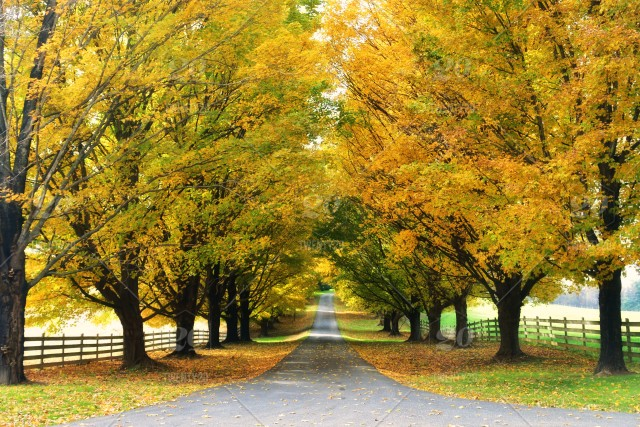 a long driveway with
