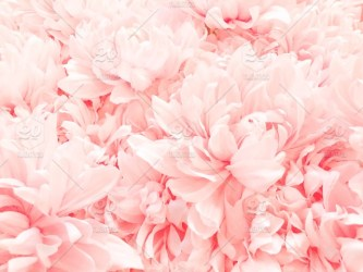 Artificial pink flowers stock photo a1d13893 5267 43a7 a3ee 445264225944