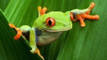 Amphibians Animals Eden Channel
