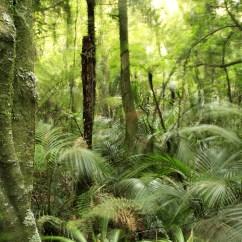 Diagram Of A Tropical Forest Roketa Go Kart Wiring Rainforest Facts Plants Nature Eden Channel