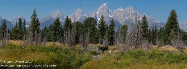 View of the Teton Mountain Range in Teton County, Wyoming. Photo by Susan Green.