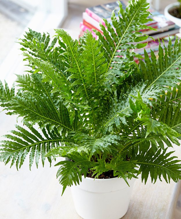 7 plantes pour gayer un espace l 39 ombre une plante for Plantes qui poussent a l ombre
