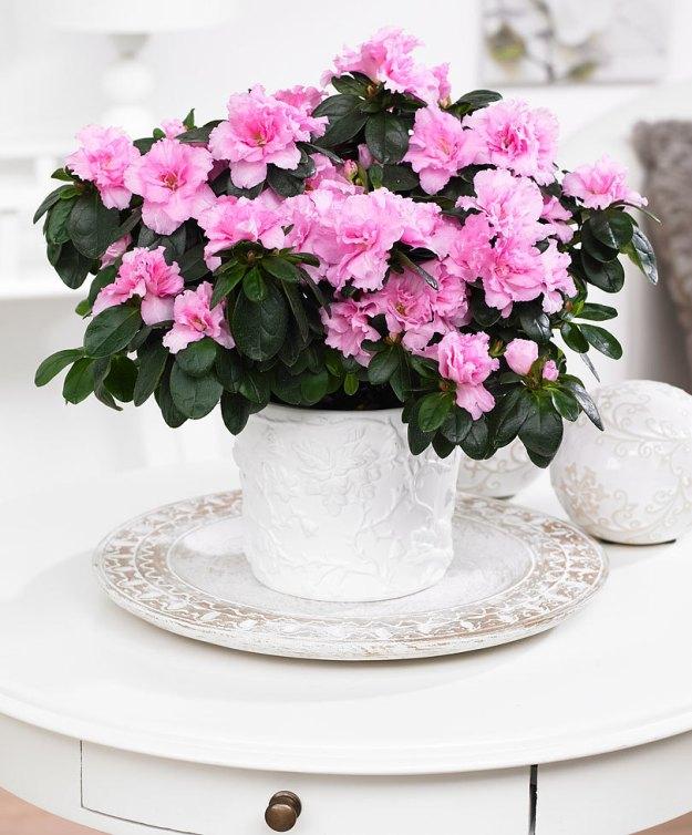 7 plantes pour gayer un espace l 39 ombre une plante pour mon bureau. Black Bedroom Furniture Sets. Home Design Ideas