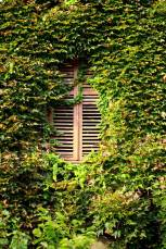 Green-Window-1_uspmie
