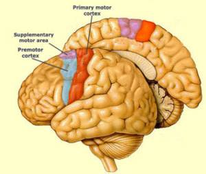 Mirror neurons the neuro psychology of nlp modelling for Mirror neurons psychology definition