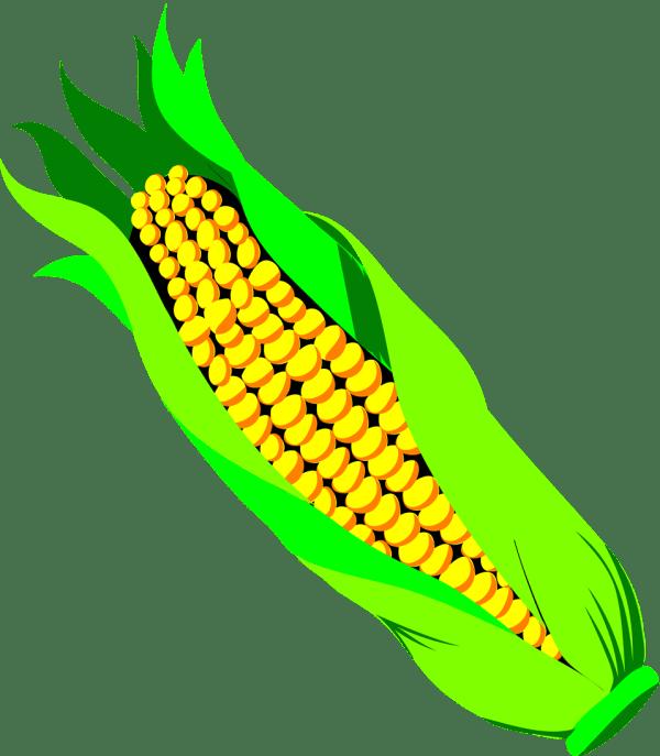 corn free stock illustration
