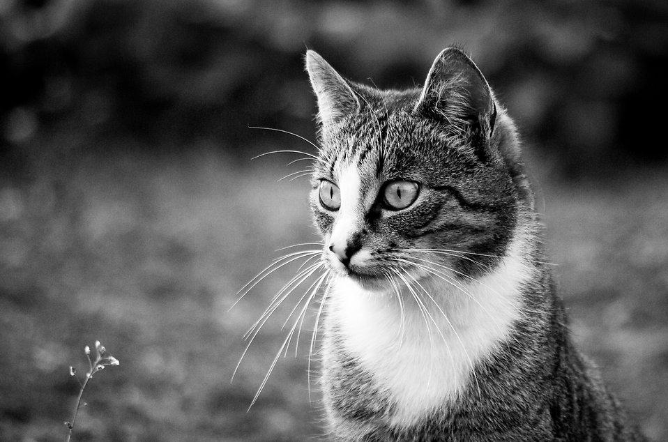 cat free stock photo