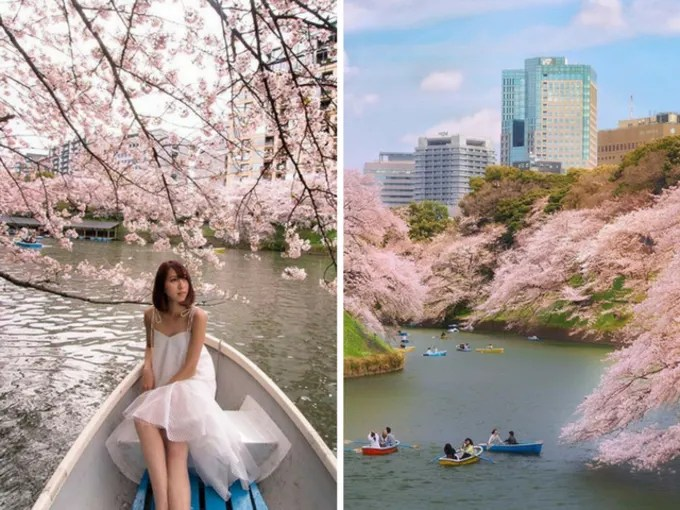 công viên chidoriga-fuchi là địa điểm ngắm hoa anh đào