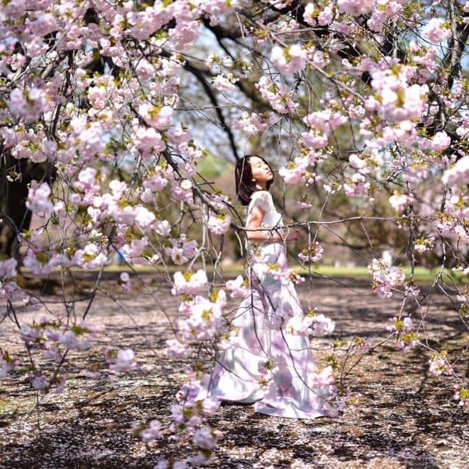 shinjuku gyoen là địa điểm ngắm hoa anh đào