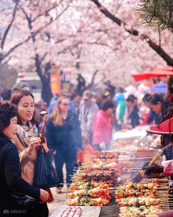 yeouido là một địa điểm ngắm hoa anh đào
