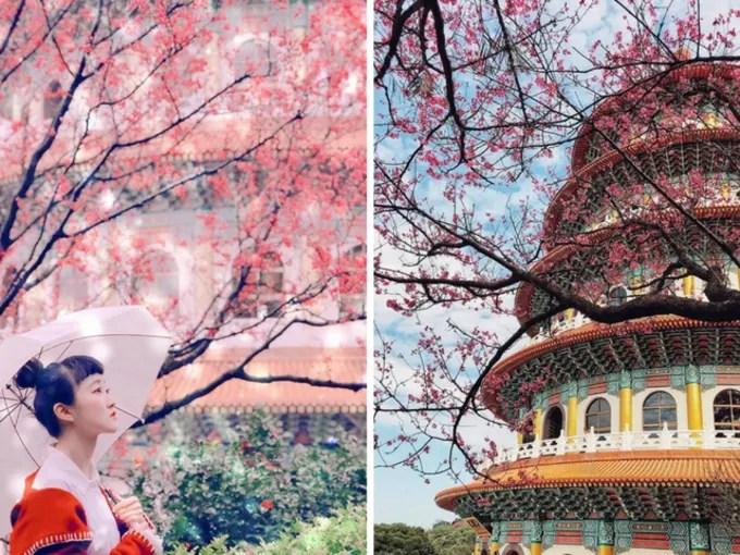 đền wuju tianyuan là một địa điểm ngắm hoa anh đào