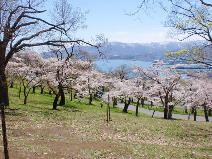 【2020北海道櫻花季】北海道必去8大賞櫻景點,交通,花期最新情報 - Klook Travel Blog