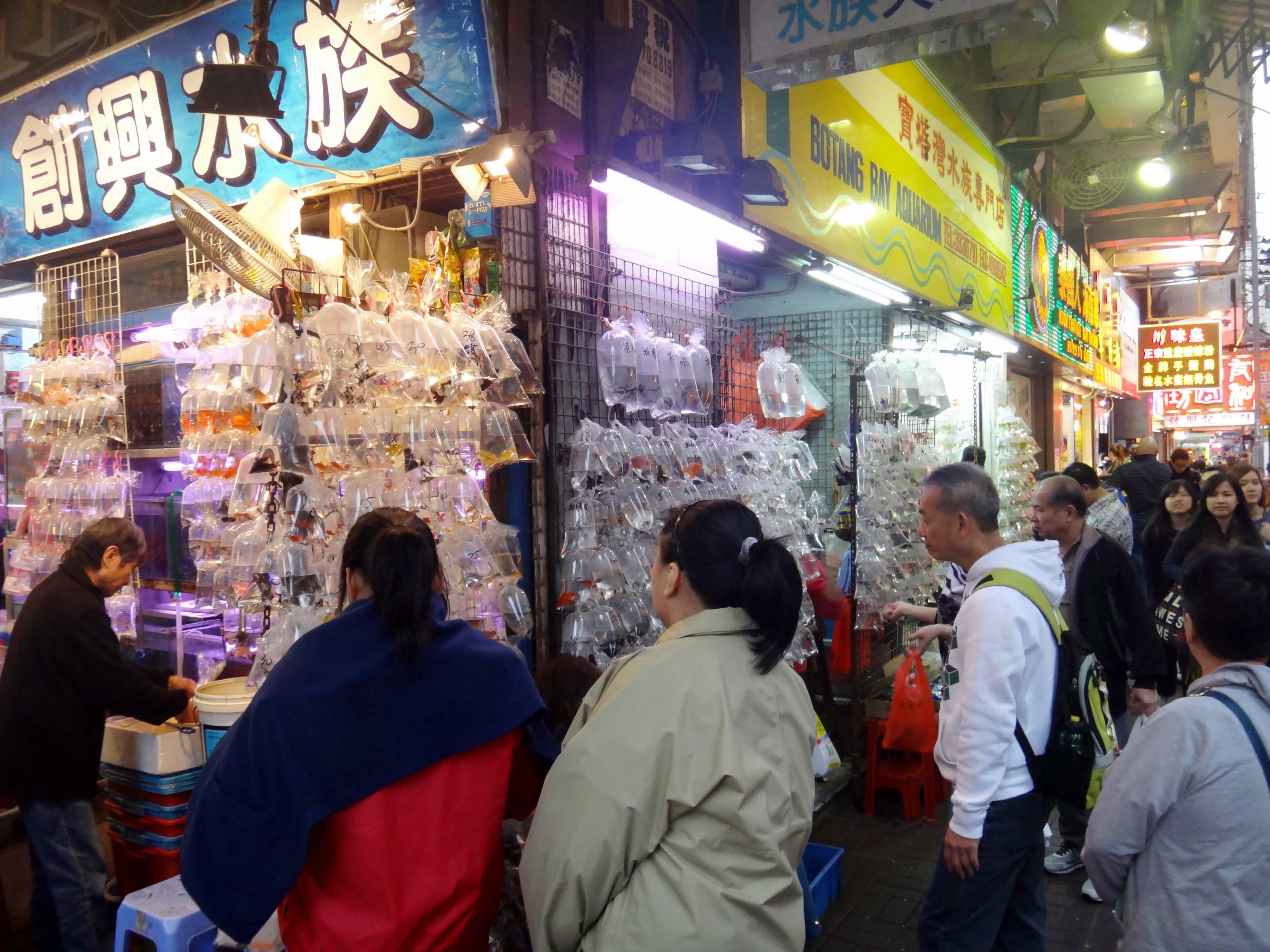 【香港自由行】旺角逛街指南!買衣買鞋還能買金魚 旺角特色街道攻略 - Klook Travel Blog