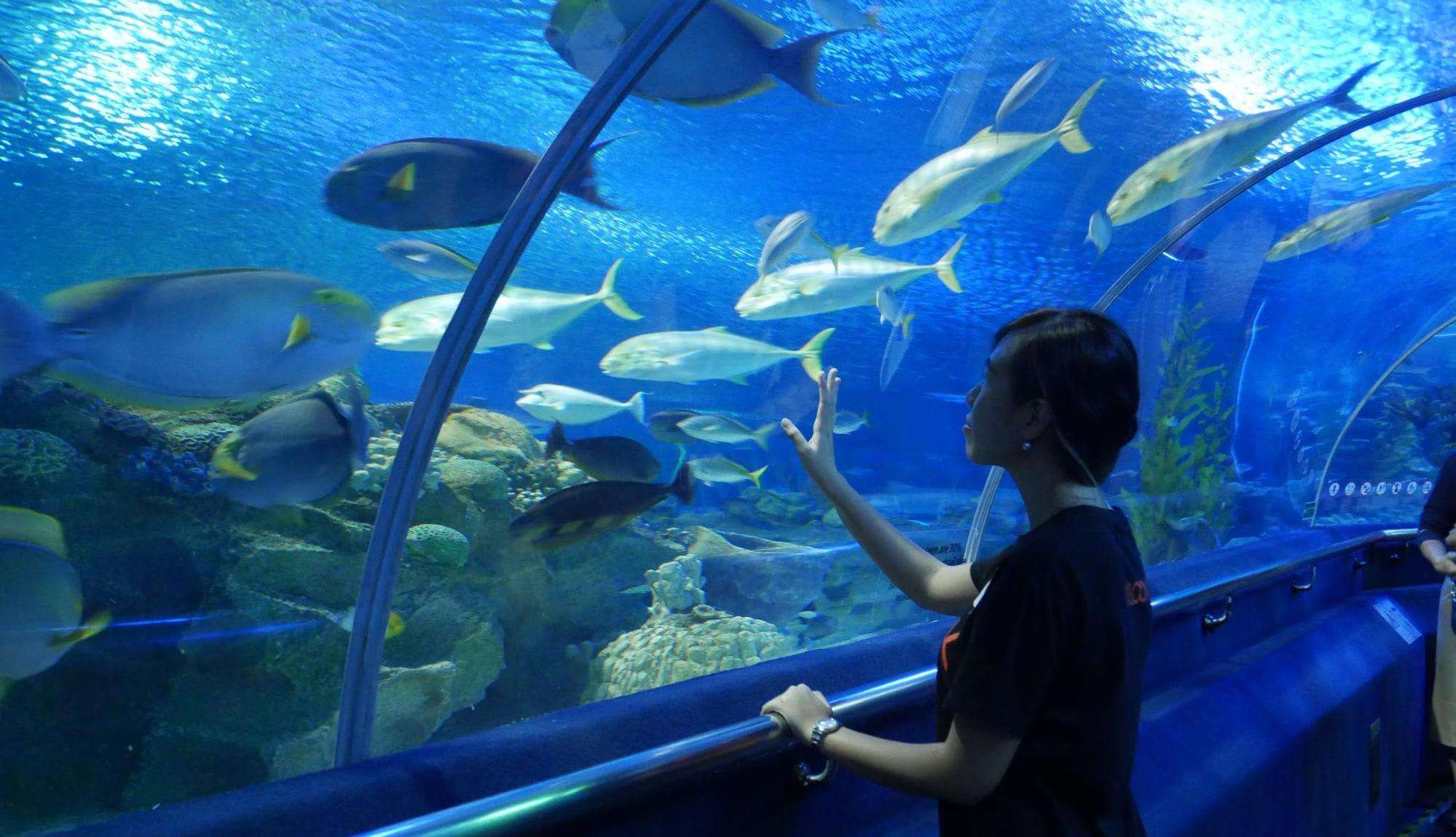 Aquaria KLCC Unveils Its Christmas Special Which Includes