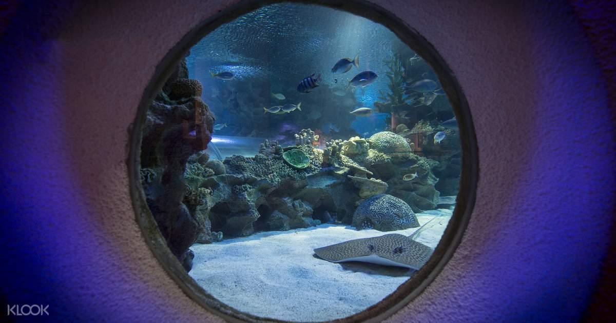 Aquaria KLCC Ticket Kuala Lumpur  Klook