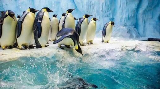 企鵝網紅世界