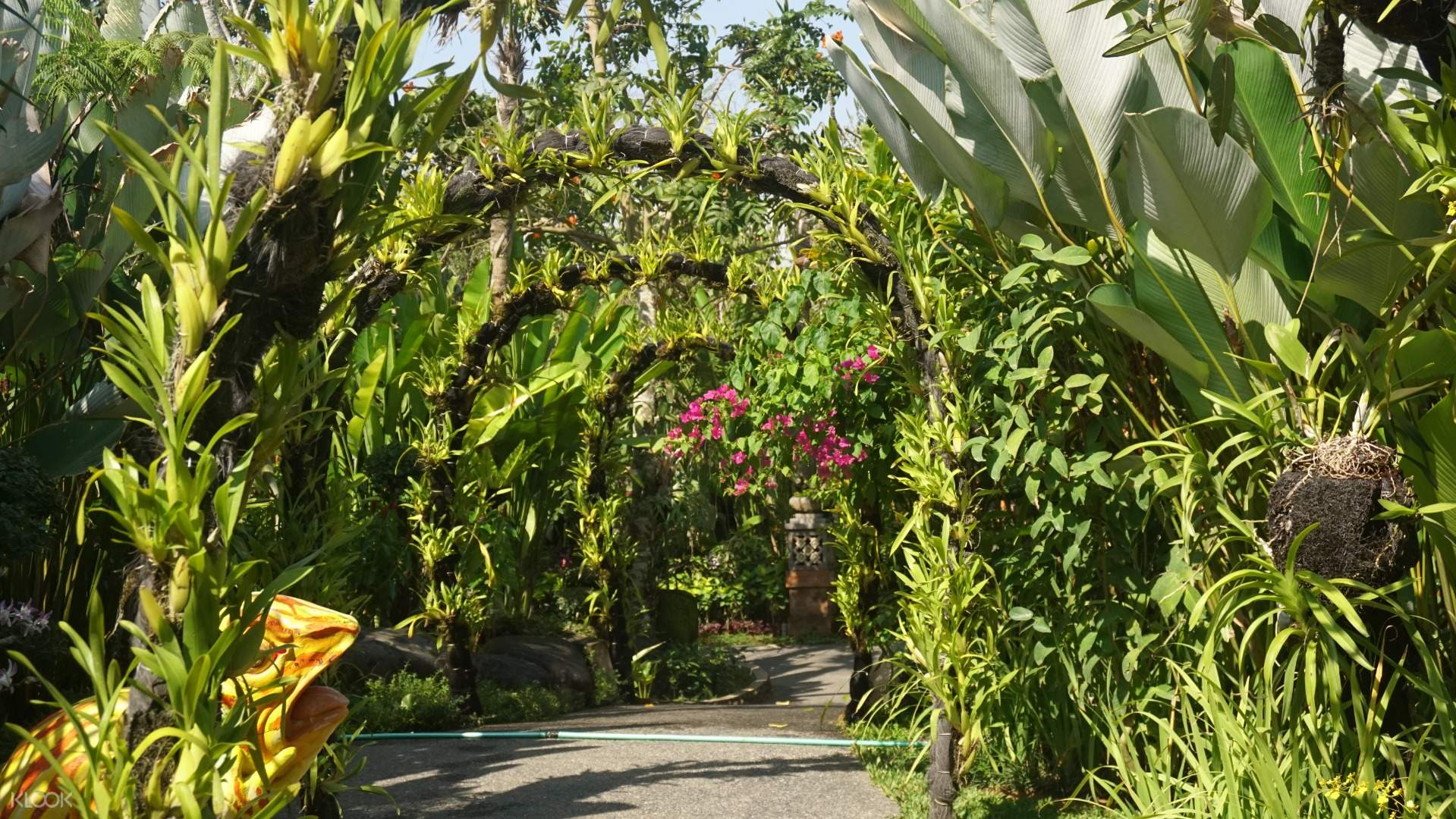 Kemenuh Orchid Garden And Dragonfly And Bonsai Park Tickets In Bali