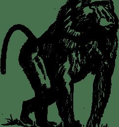 baboon [ 958 x 1207 Pixel ]