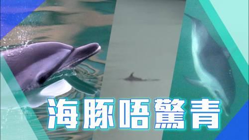 被困黃金海岸冇有怕 海豚仔梳乎游水 | 頭條PopNews