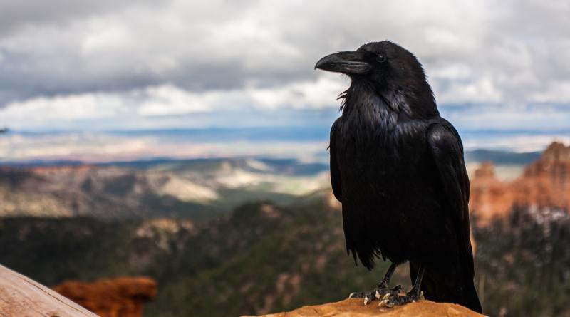 Cuervos 1 – Drones 0