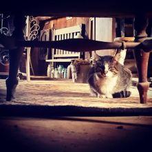 Alvy under chair