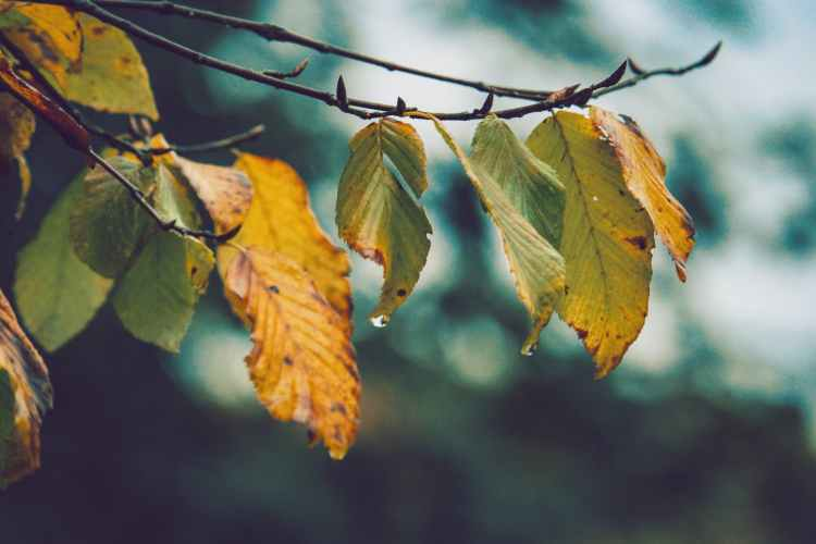 withered leaves close up photo
