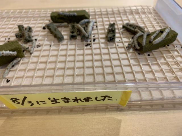 富岡製糸所
