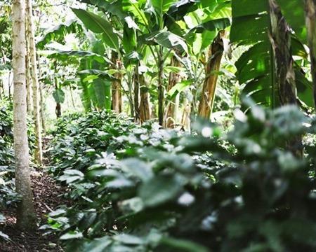 Nicaragua Olomega