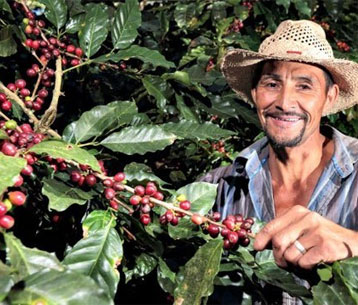 Rescue Me Coffee Farm