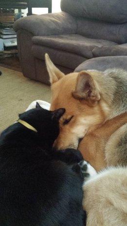 Cap'n Jack and Sophie, sibling love.