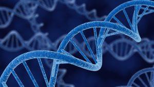 Genetics Research Paper Examples EssayEmpire