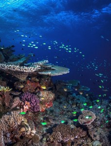 Healthy coral reef slope, © Matt Curnock 2013.