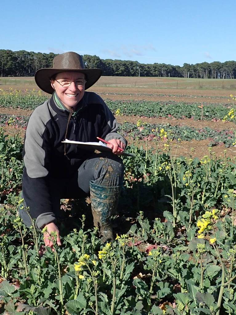 Visitor Dr Lydia Bousset in a canola field examining lesions on leaves caused by blackleg