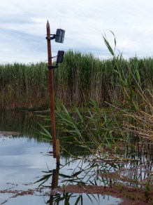 Motion-sensing and time-lapse cameras set up on nests. Image credit: Heather McGinness
