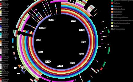 Genome comparison figure