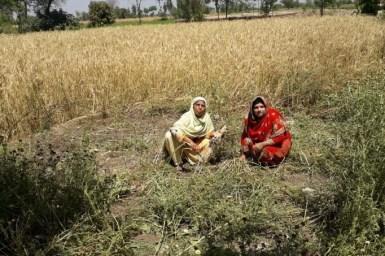 An image of two women working in the field in Pakistan