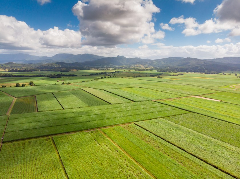 Sugarcane fields near the town of Murwillumbah and Wollumbin National Park (Mt Warning) in rural New South Wales, Australia. Source: Envato.
