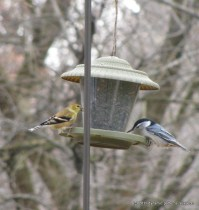 1-cropped-birds_5-22-2011_a