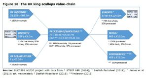 Figure 18: The UK king scallops value-chain