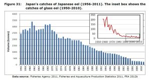Figure 31: Japan's catches of Japanese eel (1956-2011). The inset box shows the catches of glass eel (1950-2010).