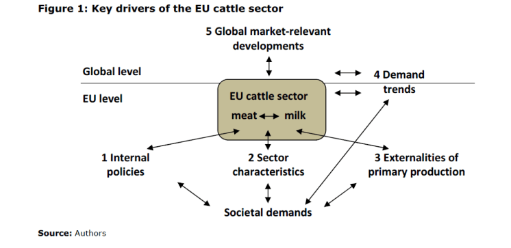 Figure 1: Key drivers of the EU cattle sector