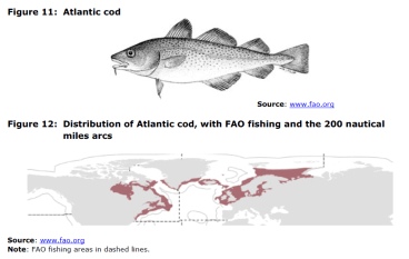Figure 11 Atlantic cod and Figure 12 Distribution of Atlantic cod, with FAO fishing and the 200 nautical miles arcs