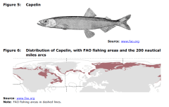 Figure 5 Capelin and Figure 6 Distribution of Capelin, with FAO fishing areas and the 200 nautical miles arcs