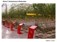 Photo 7: Greenhouse in Rotterdam