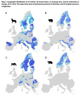 Map 2. Geographic distribution of (A) wolves, (B) brown bears, (C) Eurasian lynx, and (D) wolverines in Europe, 2012, 2016. The maps show areas of permanent presence in dark blue, and of irregular presence in light blue