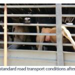 Figure 13. Substandard road transport conditions after sea journey