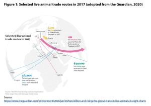 Figure 1: Selected live animal trade routes in 2017 (adopted from the Guardian, 2020)